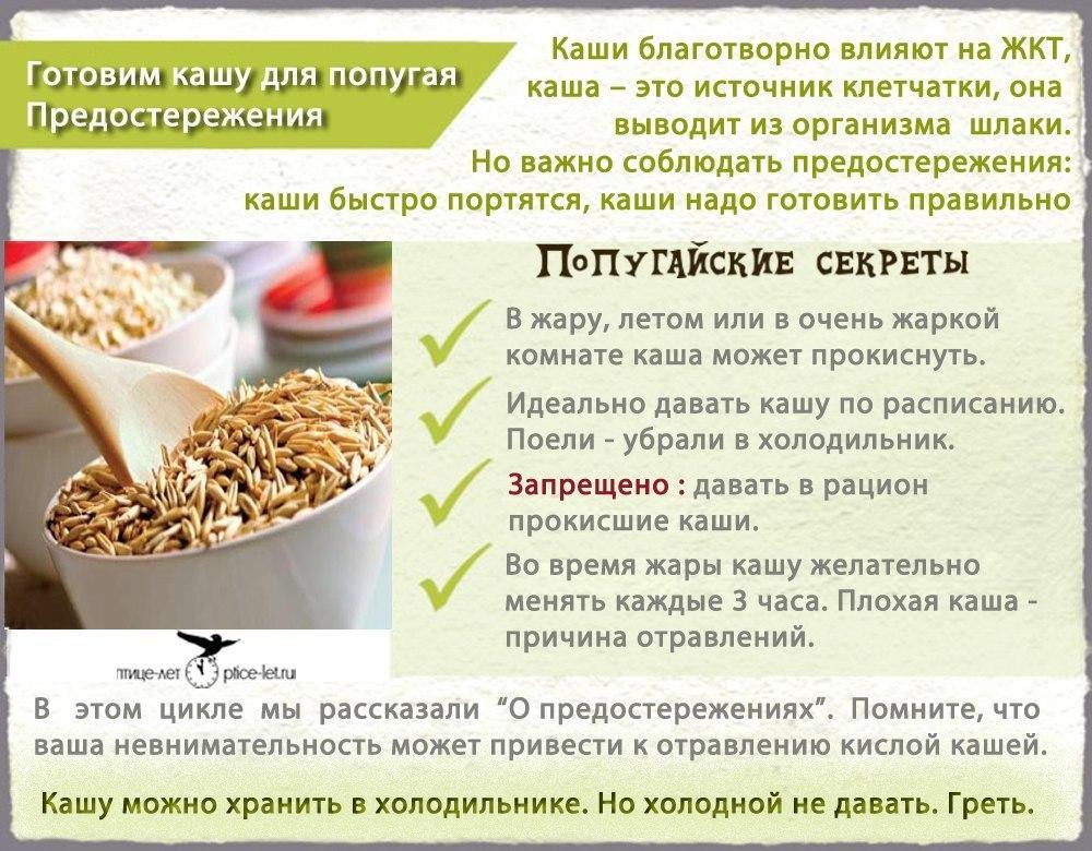 Чем кормить попугая в домашних условиях список 614